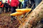 Fungus Walk - Wildlife Trust