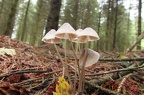 Fungus Walk - Wildlife Trust